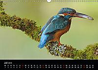 Der Eisvogel...fliegendes Juwel (Wandkalender 2019 DIN A3 quer) - Produktdetailbild 7