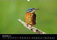Der Eisvogel...fliegendes Juwel (Wandkalender 2019 DIN A3 quer) - Produktdetailbild 11