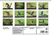 Der Eisvogel...fliegendes Juwel (Wandkalender 2019 DIN A3 quer) - Produktdetailbild 13