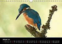 Der Eisvogel...fliegendes Juwel (Wandkalender 2019 DIN A4 quer) - Produktdetailbild 1