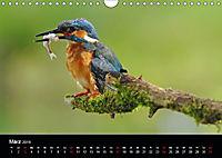 Der Eisvogel...fliegendes Juwel (Wandkalender 2019 DIN A4 quer) - Produktdetailbild 3