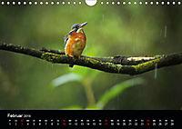 Der Eisvogel...fliegendes Juwel (Wandkalender 2019 DIN A4 quer) - Produktdetailbild 2