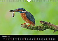 Der Eisvogel...fliegendes Juwel (Wandkalender 2019 DIN A4 quer) - Produktdetailbild 10