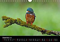 Der Eisvogel...fliegendes Juwel (Wandkalender 2019 DIN A4 quer) - Produktdetailbild 12
