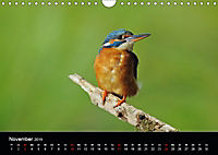Der Eisvogel...fliegendes Juwel (Wandkalender 2019 DIN A4 quer) - Produktdetailbild 11