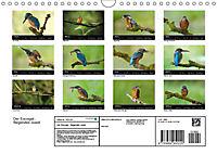 Der Eisvogel...fliegendes Juwel (Wandkalender 2019 DIN A4 quer) - Produktdetailbild 13