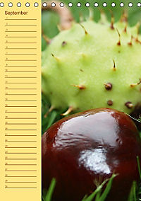 Der Geburtstagskalender (Tischkalender immerwährend DIN A5 hoch) - Produktdetailbild 9
