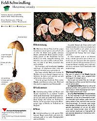Der grosse Pilzatlas - Produktdetailbild 6