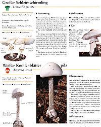 Der grosse Pilzatlas - Produktdetailbild 8