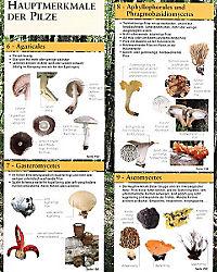 Der grosse Pilzatlas - Produktdetailbild 2