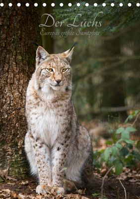 Der Luchs - Europas größte Samtpfote (Tischkalender 2019 DIN A5 hoch), Cloudtail the Snow Leopard