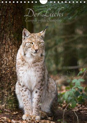 Der Luchs - Europas größte Samtpfote (Wandkalender 2019 DIN A4 hoch), Cloudtail the Snow Leopard