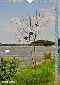 Der Meerbusch - Meerbuscher Rheinspaziergang (Wandkalender 2019 DIN A4 hoch) - Produktdetailbild 3