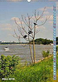 Der Meerbusch - Meerbuscher Rheinspaziergang (Wandkalender 2019 DIN A3 hoch) - Produktdetailbild 3