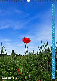 Der Meerbusch - Meerbuscher Rheinspaziergang (Wandkalender 2019 DIN A3 hoch) - Produktdetailbild 4