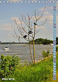 Der Meerbusch - Meerbuscher Rheinspaziergang (Tischkalender 2019 DIN A5 hoch) - Produktdetailbild 3