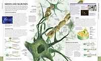 Der menschliche Körper - Produktdetailbild 2