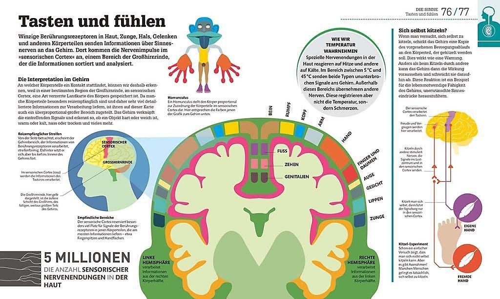 Wie Funktioniert Der Menschliche Körper
