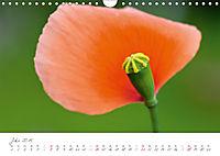 Der Mohn ist aufgegangen (Wandkalender 2019 DIN A4 quer) - Produktdetailbild 7
