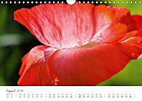 Der Mohn ist aufgegangen (Wandkalender 2019 DIN A4 quer) - Produktdetailbild 8
