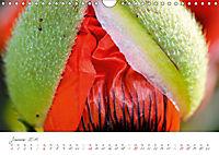 Der Mohn ist aufgegangen (Wandkalender 2019 DIN A4 quer) - Produktdetailbild 1
