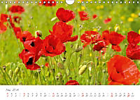 Der Mohn ist aufgegangen (Wandkalender 2019 DIN A4 quer) - Produktdetailbild 5