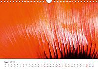 Der Mohn ist aufgegangen (Wandkalender 2019 DIN A4 quer) - Produktdetailbild 4