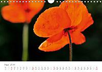 Der Mohn ist aufgegangen (Wandkalender 2019 DIN A4 quer) - Produktdetailbild 3