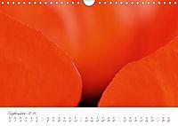 Der Mohn ist aufgegangen (Wandkalender 2019 DIN A4 quer) - Produktdetailbild 9