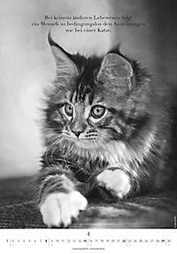Der poetische Katzenkalender 2018 - Produktdetailbild 4
