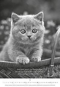 Der poetische Katzenkalender 2018 - Produktdetailbild 5