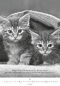 Der poetische Katzenkalender 2018 - Produktdetailbild 6