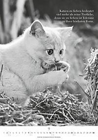 Der poetische Katzenkalender 2018 - Produktdetailbild 9