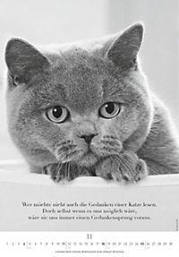 Der poetische Katzenkalender 2018 - Produktdetailbild 11