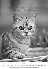 Der poetische Katzenkalender 2018 - Produktdetailbild 10