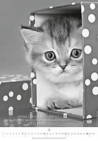 Der poetische Katzenkalender 2019 - Produktdetailbild 4
