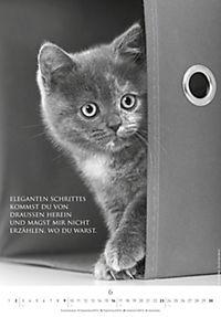 Der poetische Katzenkalender 2019 - Produktdetailbild 6