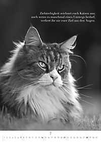 Der poetische Katzenkalender 2019 - Produktdetailbild 7