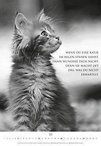 Der poetische Katzenkalender 2019 - Produktdetailbild 10