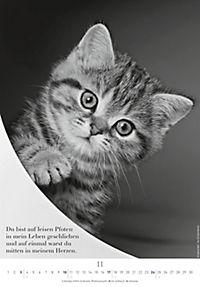Der poetische Katzenkalender 2019 - Produktdetailbild 11