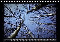 Der Reichswald bei Kleve (Tischkalender 2019 DIN A5 quer) - Produktdetailbild 1