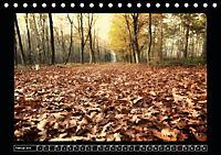 Der Reichswald bei Kleve (Tischkalender 2019 DIN A5 quer) - Produktdetailbild 2