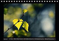 Der Reichswald bei Kleve (Tischkalender 2019 DIN A5 quer) - Produktdetailbild 3