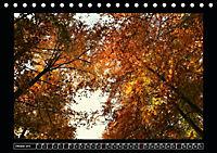 Der Reichswald bei Kleve (Tischkalender 2019 DIN A5 quer) - Produktdetailbild 10