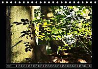 Der Reichswald bei Kleve (Tischkalender 2019 DIN A5 quer) - Produktdetailbild 5