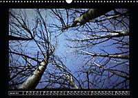 Der Reichswald bei Kleve (Wandkalender 2019 DIN A3 quer) - Produktdetailbild 1
