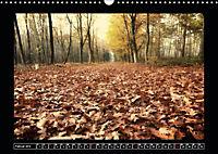 Der Reichswald bei Kleve (Wandkalender 2019 DIN A3 quer) - Produktdetailbild 2