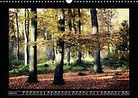 Der Reichswald bei Kleve (Wandkalender 2019 DIN A3 quer) - Produktdetailbild 4
