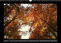 Der Reichswald bei Kleve (Wandkalender 2019 DIN A3 quer) - Produktdetailbild 10