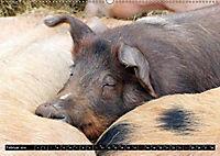 Der Schweinekalender (Wandkalender 2019 DIN A2 quer) - Produktdetailbild 2